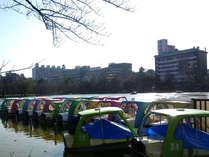 *近隣観光【不忍池】ボートを漕いで楽しむことのできる「ボート池」もそのひとつ。