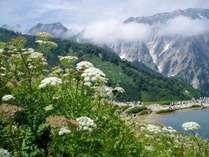八方尾根植物研究所路白馬連峰が目の前に迫る雲上の自然研究路