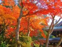 美しい鎌倉の紅葉は11月~12月が見頃です。鎌倉までは、JR横須賀線で約20分!