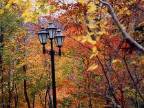 *【施設周辺】四季折々で違った顔を見せる木々に囲まれた当館