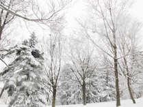 *【雪景色】白銀の世界に包まれる雪景色は、圧倒的!
