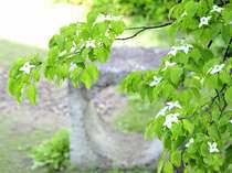 【夏休み限定】<小学生&幼児添い寝無料>那須高原で爽やかに過ごすファミリープラン(朝食付)