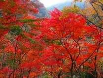 蔵王の燃える秋は紅葉狩りと美味食欲の旅♪地元食材の美味しい料理と美肌の天然温泉は貸切OK紅葉狩りプラン