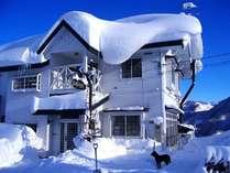 真冬のシルバーファーン