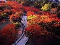 季節の移り変わりですね。秋はホテルから車で10分「白山公園」で紅葉散歩なんていかがでしょうか♪