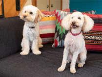 愛犬とゆっくりお楽しみいただけるお部屋もご用意しております。