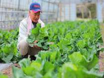 【自家農園】専任のスタッフが育てる野菜