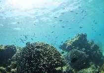 透明度の高い美ら海