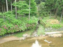 ■川遊び■ファミリーにおすすめ!吉野川の支流で思いっきり遊ぼう