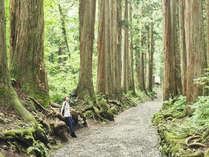 【☆信州3大パワスポ☆】戸隠神社奥社・荘厳な空気に包まれた杉並木の参道