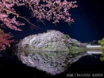 【彦根城の桜】夜はライトアップが行われます。例年見頃:3月下旬~4月中旬