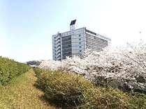 満開の桜が咲き乱れる、原鶴温泉街