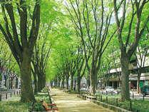 仙台のシンボル定禅寺通りに面しています。夏は七夕パレード・冬は光のページェントでにぎわいます。