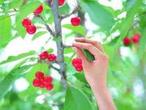 果物いっぱい♪旬なフルーツ30分間食べ放題!!自然の中でのんびりと過ごせる芦ノ牧温泉!