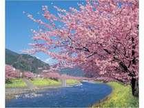 【2月上旬~3月上旬】早咲き桜『河津桜』