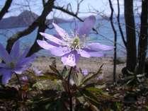 【春】色鮮やかな花一輪一輪が、春の洞爺湖に色彩を添える。