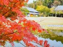 北の丸の紅葉