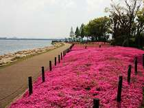 びわ湖温泉 旅亭紅葉画像1