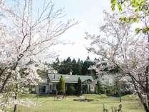 満開の桜と母屋