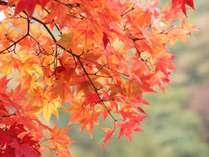 [秋の優雅旅]奥秩父の秋。秋の実りを手作り料理でゆっくり楽しむ★ミニお土産付き♪1泊2食付
