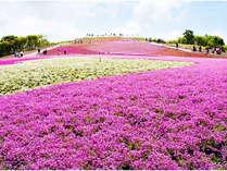 *5月中旬~下旬が満開です!茶臼山高原までお車約20分!