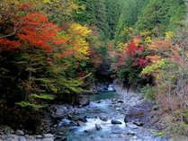 紅葉の阿寺渓谷
