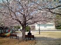 桜満開の西坂公園(日本二十六聖人殉教地)*当館より徒歩3分