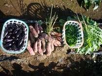 自家栽培で採れた旬の野菜たちです。