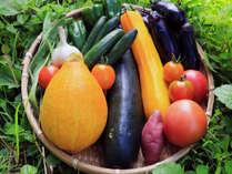 自家栽培の夏野菜をたっぷり使って♪フードコーディネーターの資格を持つ女将の創作料理☆