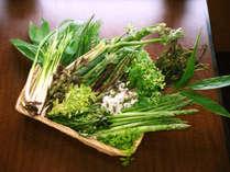 志賀高原は山菜の宝庫。季節限定のお料理をお楽しみください。