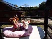 ワンちゃんと一緒!「世界遺産・富士山」ふもとのコテージでのびのびスティ★夕・朝食バイキング