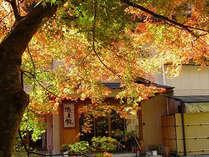 湯本館前の紅葉★せせらぎを聞きながらの自然散策もおススメです♪