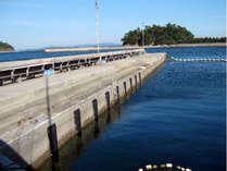 鯛やハマチ・鰺等、大小さまざまな魚が放されています海の管理釣り堀「篠島釣り天国」☆