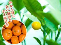 蒲郡ブランドみかん食べ放題+お土産付き♪オレンジパークにて!