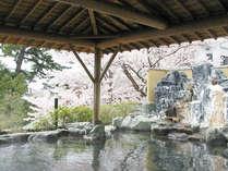姉妹館ひがきホテルの花見露天風呂≪桜の季節限定≫~無料送迎あり