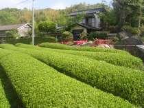 人吉・球磨の格安民宿 農家の宿 茶乃実