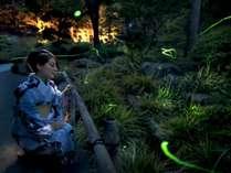 夜の庭園でほたる鑑賞/6月中旬~7月上旬開催