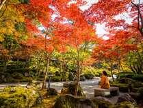 当館庭園の紅葉は10月下旬~11月中旬が見頃です