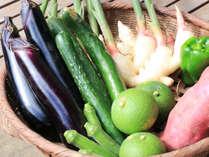 自家栽培の野菜等