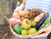 自家栽培の採れたて野菜を召し上がって頂くので、野菜の甘みや旨味をしっかり味わうことが出来ます。
