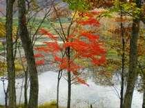 ほとりの紅葉