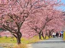 ・桜並木を散策して春を満喫♪