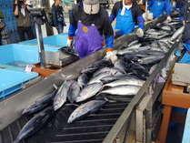 活気ある気仙沼魚市場の水揚げ!