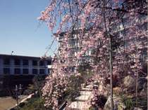 三原・竹原の格安ホテル 湯坂温泉郷 ホテル賀茂川荘