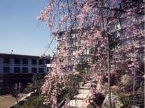 湯坂温泉郷 ホテル賀茂川荘画像1