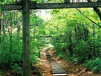*【弥彦公園】パワースポット!緑の中を気持ちよく散歩。