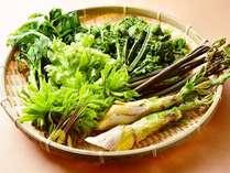 【春の山菜】雪深い大地で育った山菜は格別の味わいです♪