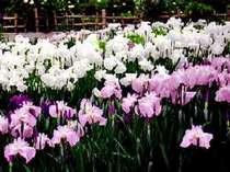 【滝谷花しょうぶ園★入園券付】春得♪1万坪に広がる花の名所で春満喫!