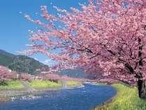 【春旅】雛のつるし飾りまつり&河津さくらまつり協賛プラン 雛祭りの入館チケットをプレゼント