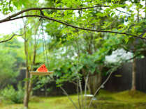 【夏の庭】お庭にかぶとむしや小鳥も遊びにきます